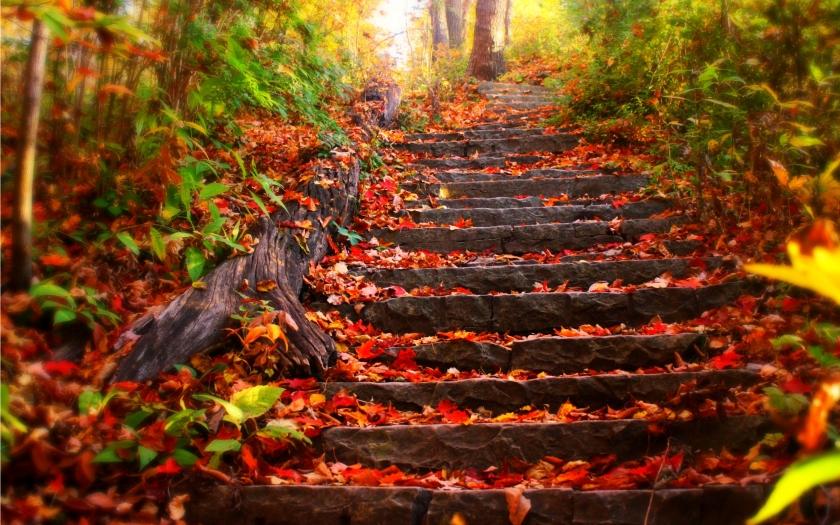 autumn-leaves-wallpaperautumn-free-wallpaper---autumn-leaves-93069-dh11nozj